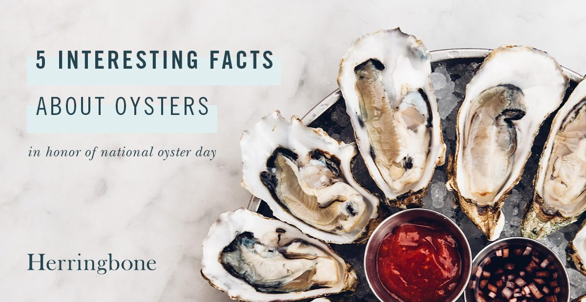5 interesting facts about oysters in honor of National Oyster Day at Herringbone Santa Monica, La Jolla, and Waikiki